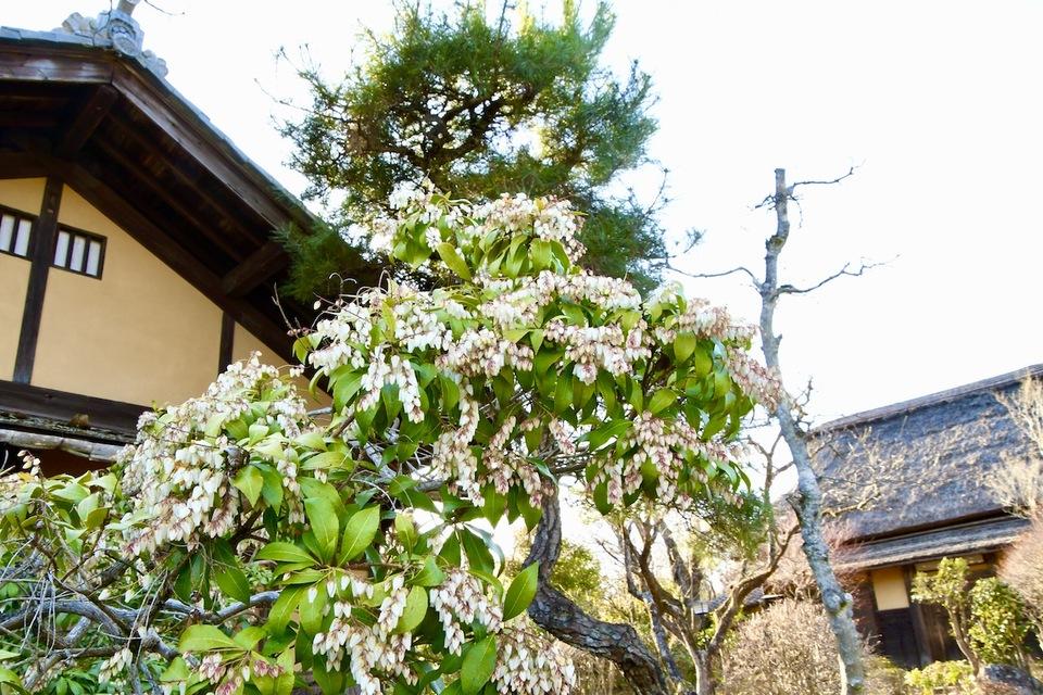 夜がらす山荘 長多喜の春
