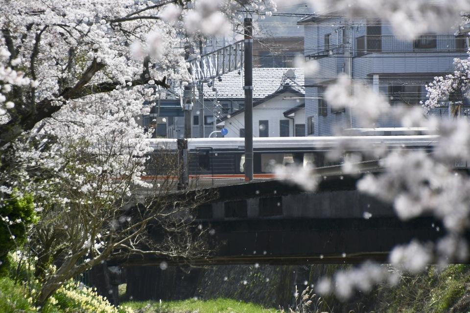 「特急しなの」と桜吹雪