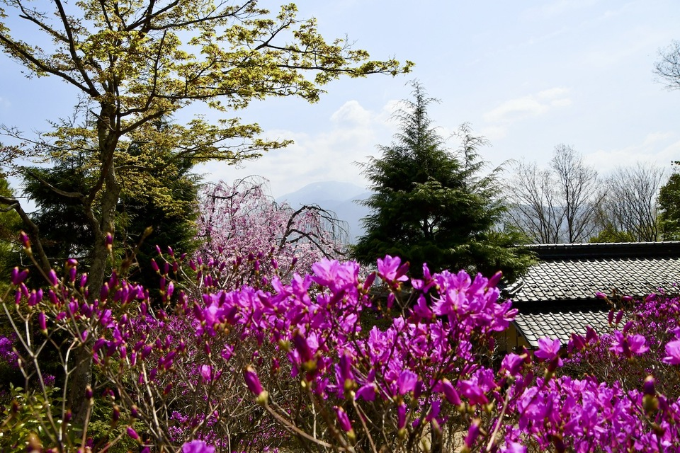霞恵那山と枝垂れ桜と三つ葉ツツジ、 border=