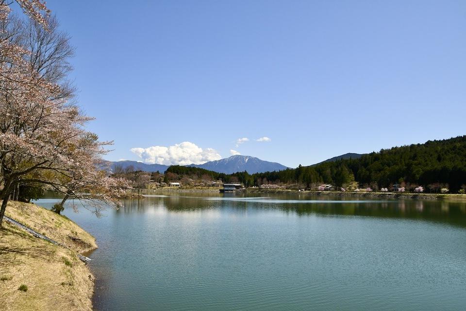 百名山恵那山と水温む四月の椛の湖、桜咲く風景。 border=
