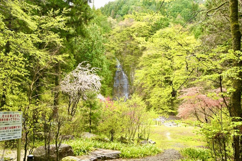 上臈の滝、青葉若葉の季節。 border=