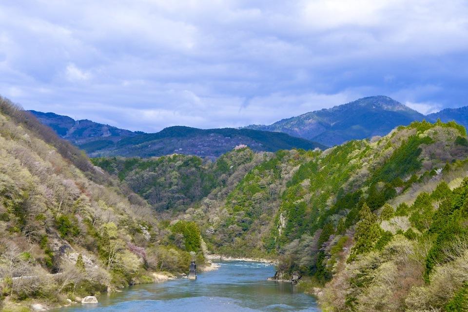 玉蔵桜、木曽川旧玉蔵橋の崖の上