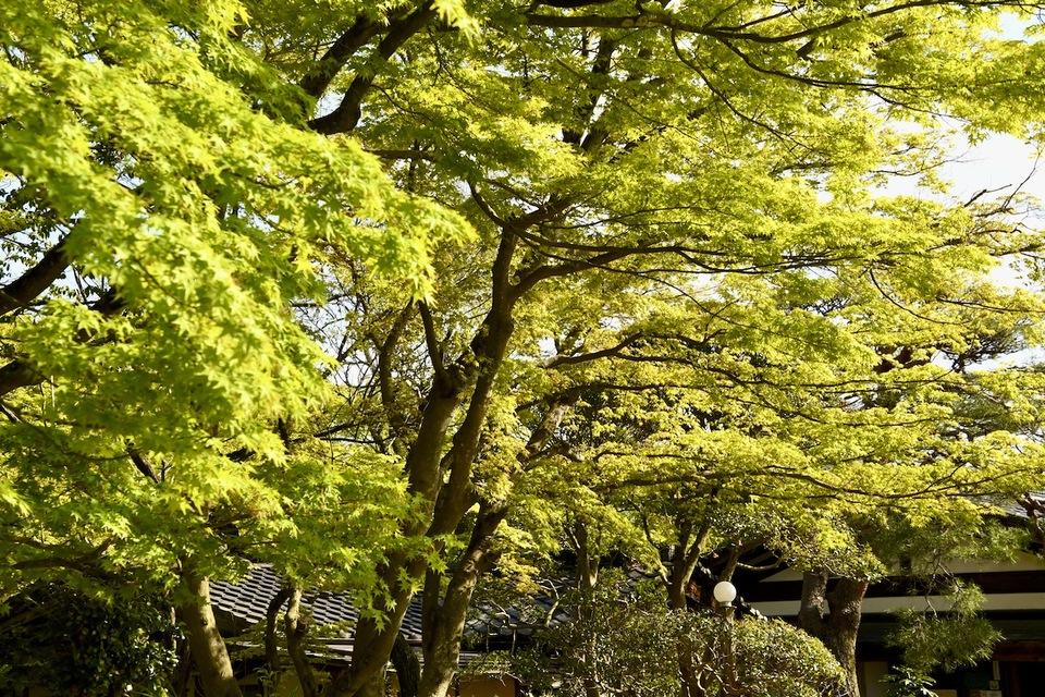 緑萌える玄関、夜がらす山荘 長多喜。