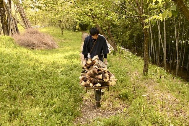 今、長多喜は筍山。今年は空前の豊作。