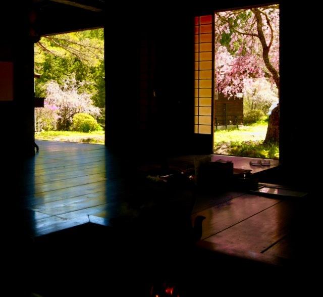 茶屋の外は桜満開、
