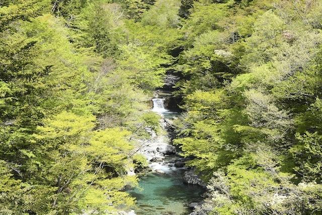 付知峡本谷渓谷、爽やかな若葉香る渓谷にエメラルド水の谷音が響く。