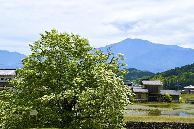 ナンジャモンジャと恵那山の風景。