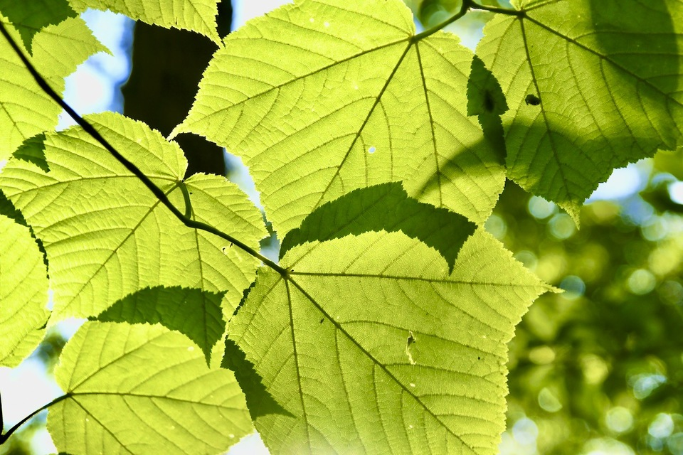 木漏れ日の お日様が 緑の贈り物