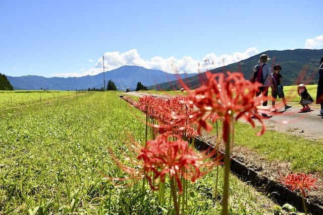 恵那山と彼岸花、そばの花は今週末から。 border=