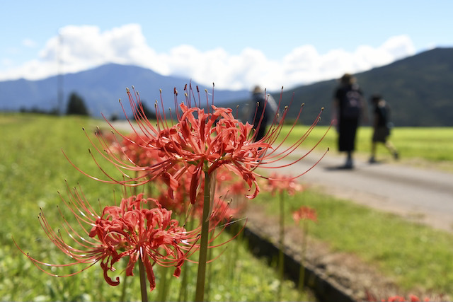 恵那山と彼岸花、そばの花は今週末から。
