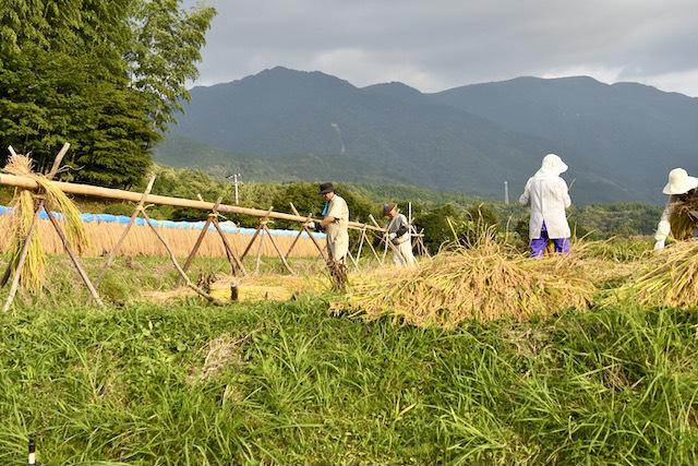 恵那山麓の日本の伝統農業、 border=