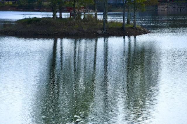椛の湖と恵那山、湖に浮かぶ弁天島の椛の木。