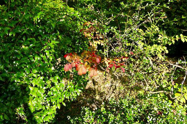 小さい秋見つけた。 border=