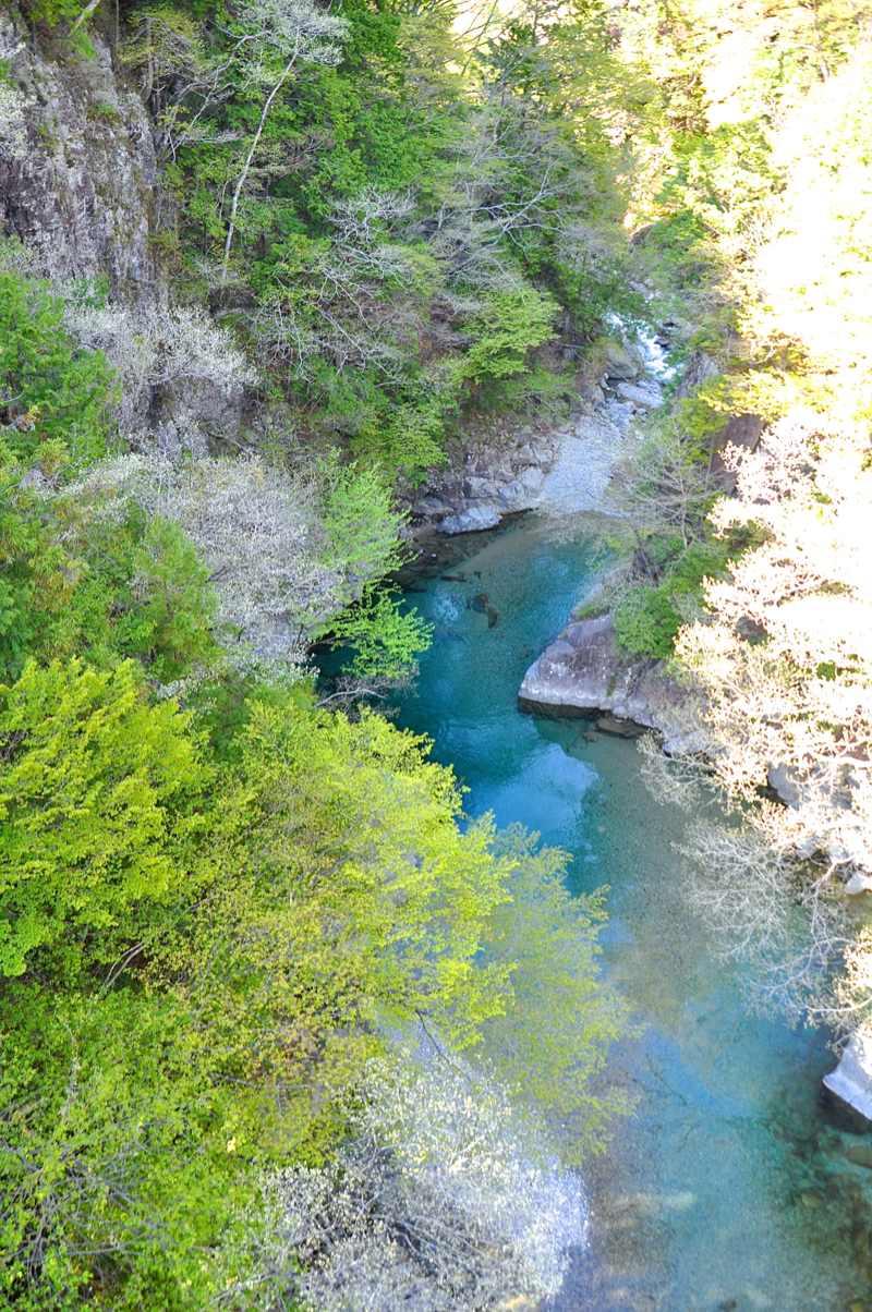 ここで深呼吸! 若葉の緑と水の碧 付知峡攻め橋 border=