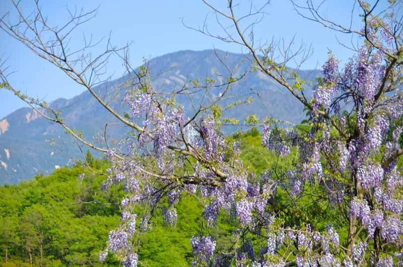 山藤と恵那山