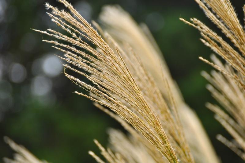 秋は急ぎ足 薄の尾花
