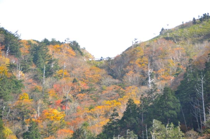 台風一過の富士見台の紅葉は最高潮。