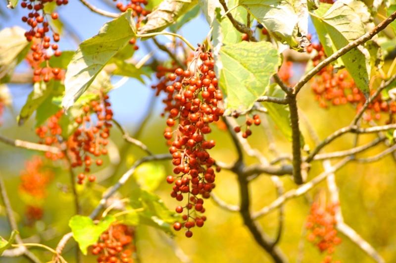 本谷橋の赤い実と赤い葉