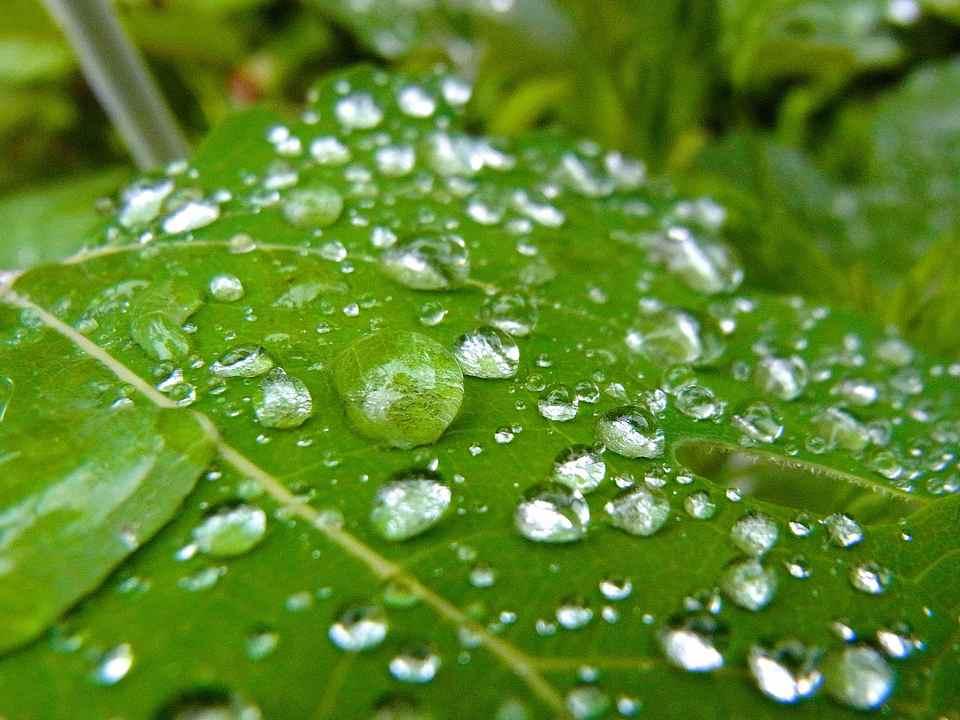 梅雨の水玉模様