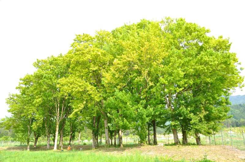 マロンパークの樹木達