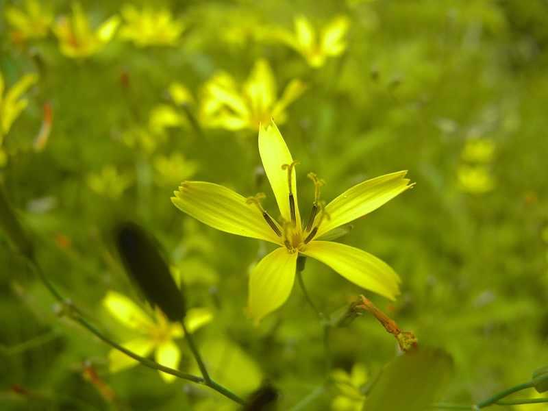 草花メッセージ ハナニガナ
