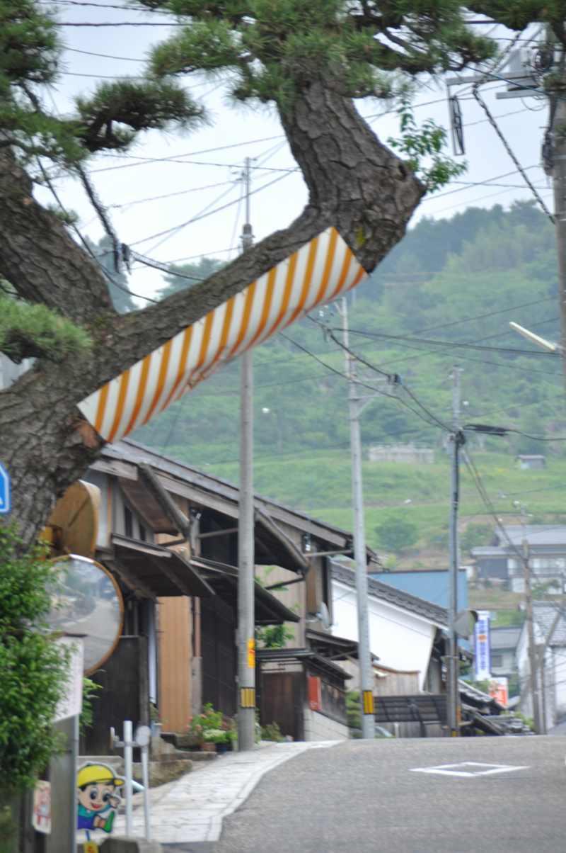 中山道を見続けて来た、松。