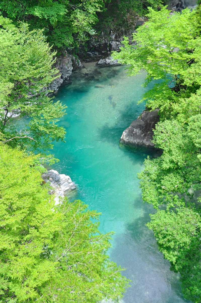 今日の攻め橋 緑鮮やかなれども水細濁り