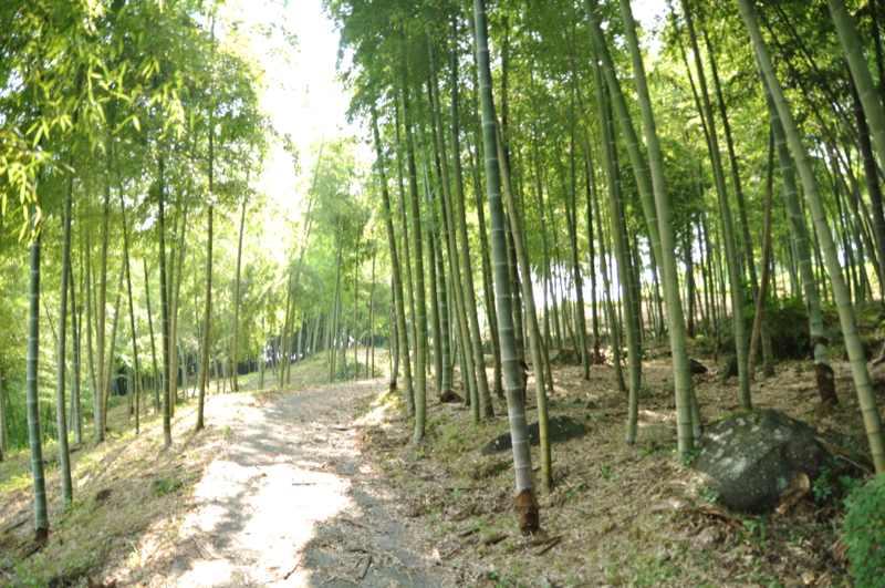 竹林の中、青竹の香りは涼やかだった。 border=