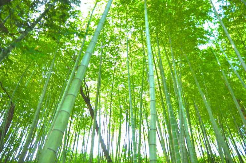竹林の中、青竹の香りは涼やかだった。