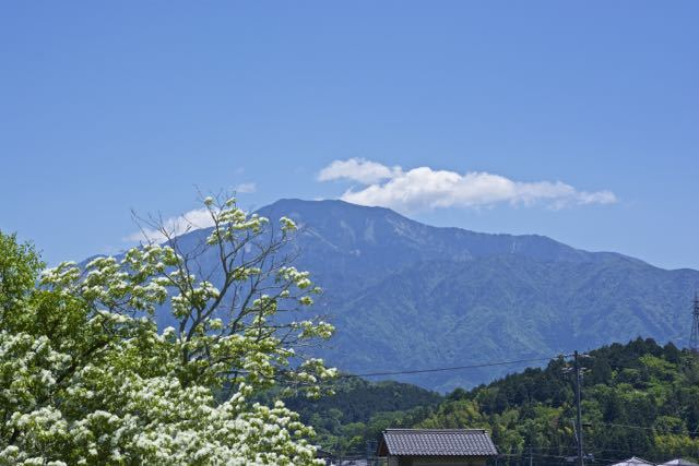 ナンジャモンジャと恵那山