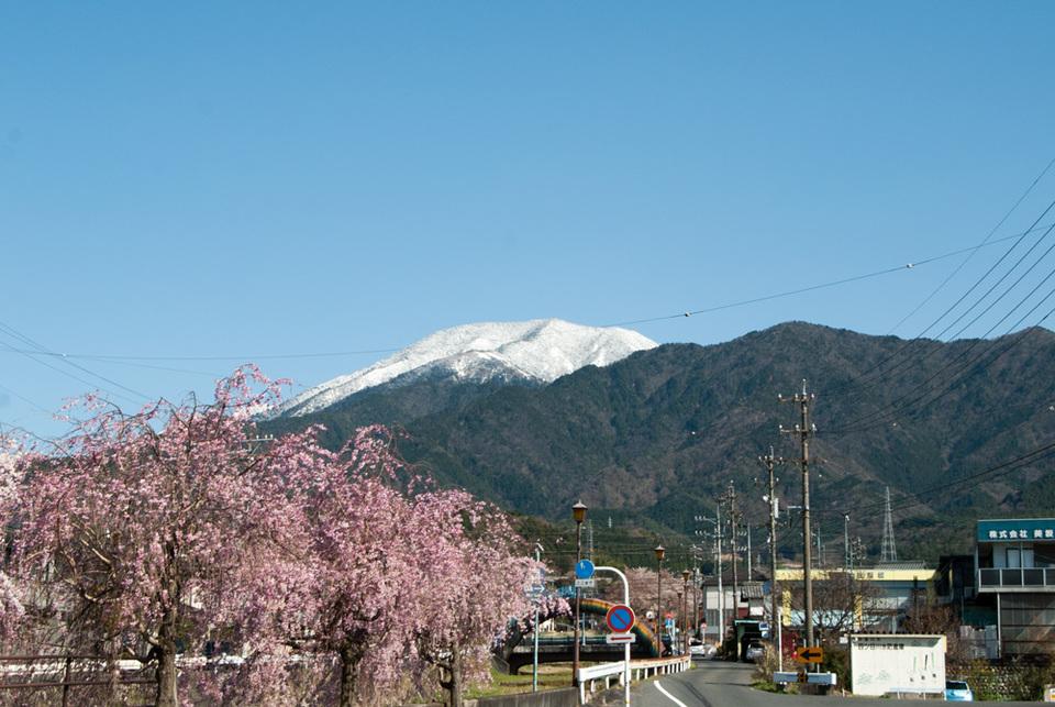 桜と雪化粧の恵那山 border=