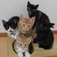 NPO法人命の応援隊 人にも動物にも優しい環境のために、一歩ずつ一歩ずつ。