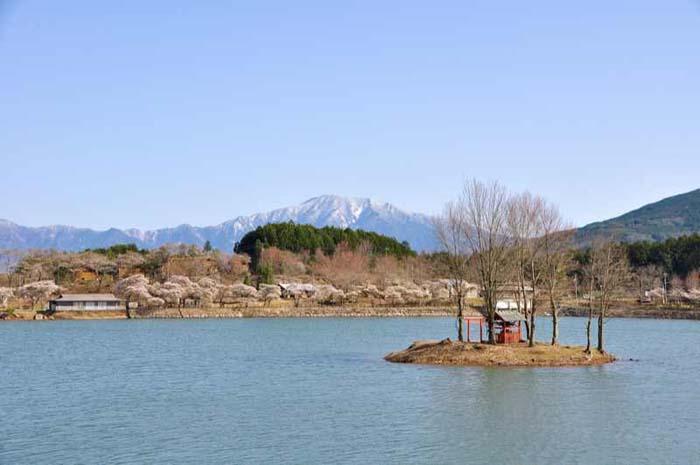【4月14日 椛の湖さくら祭り】標高560mに桜前線が駆け上がってきました。 border=