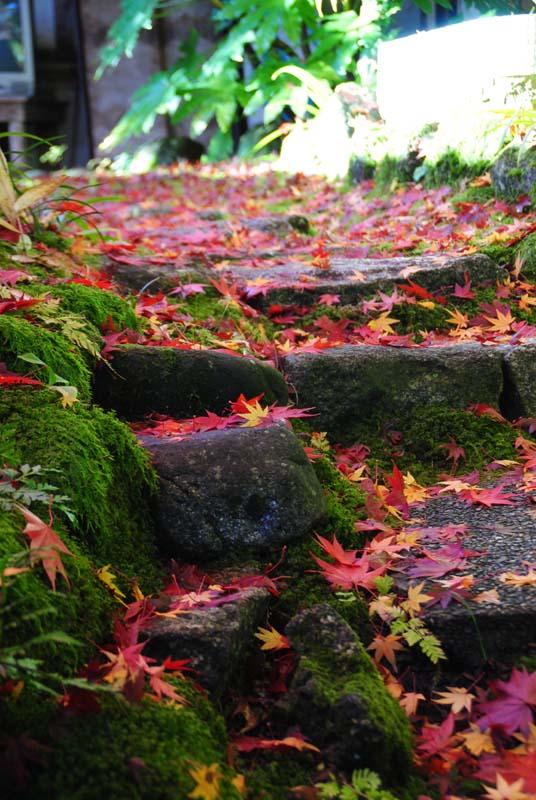 紅葉の恵那山を借景に、和空間でいただく地元産の旬の味。~夜がらす山荘長多喜~ border=