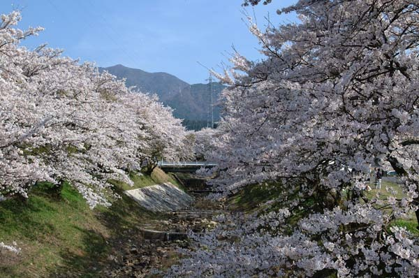 3月27日のてくてく中津川は...?間もなく4月。花の中津川をご案内。