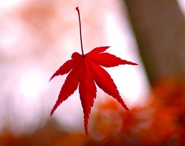 11月19日のてくてく中津川は・・・?晩秋 古民家離れの宿。 夜がらす山荘 長多喜